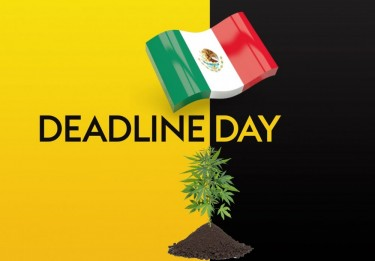 MEXICAN LEGALIZATION DEADLINE DAY