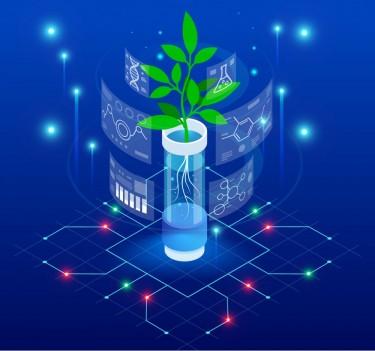 marijuana micropropagation