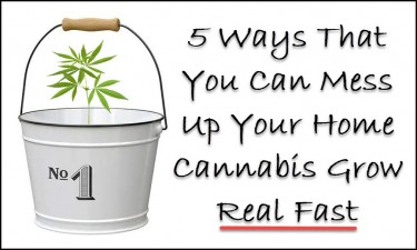 home cannabis growing mistakes