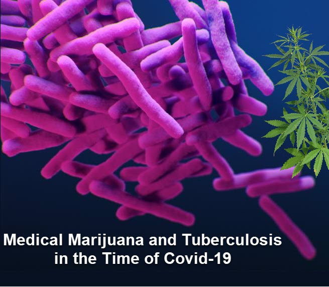 mmjfortbincovid - Medical Marijuana and Tuberculosis in the Time of COVID-19
