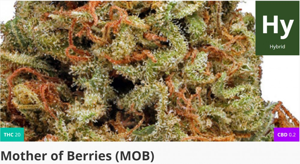 mother of berries strain