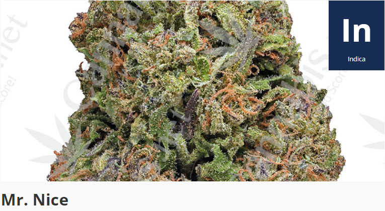 mr. nice cannabis