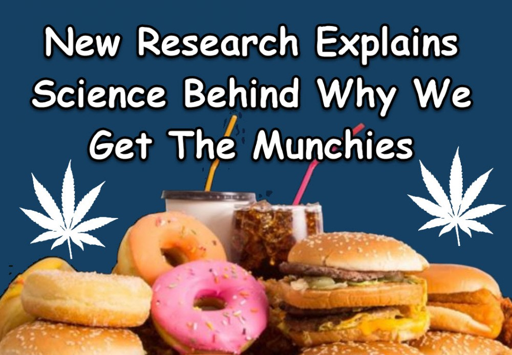 munchiesfromcannabis - Why Do Humans Like to Get High? (Science Can Explain It)