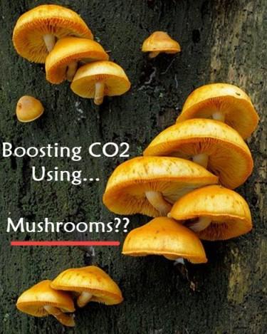 BOOSTING C02 WITH MUSHROOMS