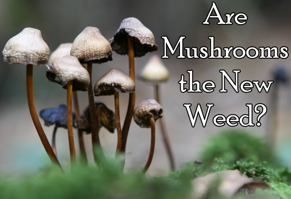 MUSHROOMS THE NEW WEED