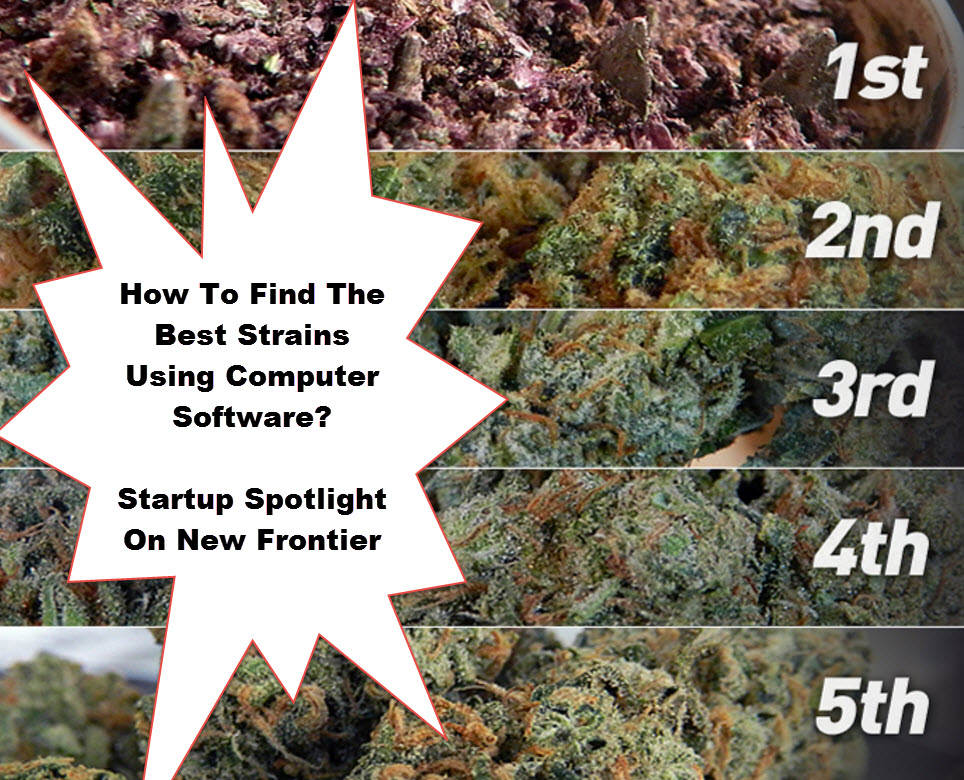 SOFTWARE TO PICK MARIJUANA STRAINS