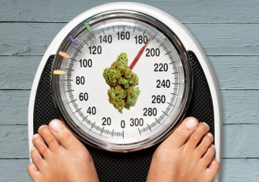 cannabis and obesity inflammation