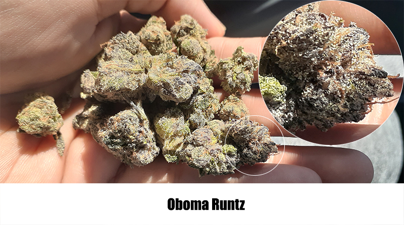 obomba runtz - 10 Best Cannabis Strains from California in 2020