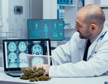 oncology cannabis