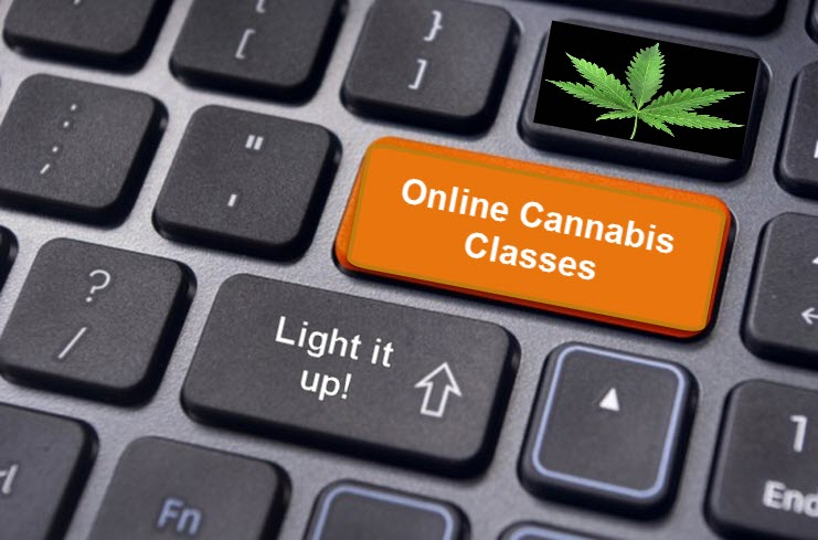 online cannabis classes