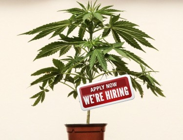 OPEN CANNABIS JOBS NOW
