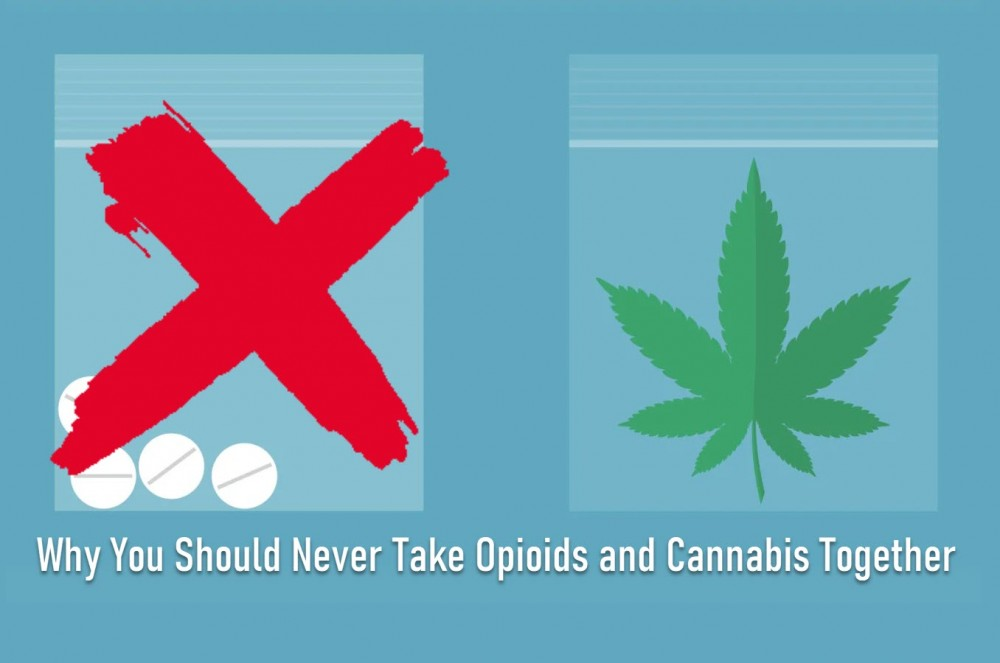 opioids and marijuana together