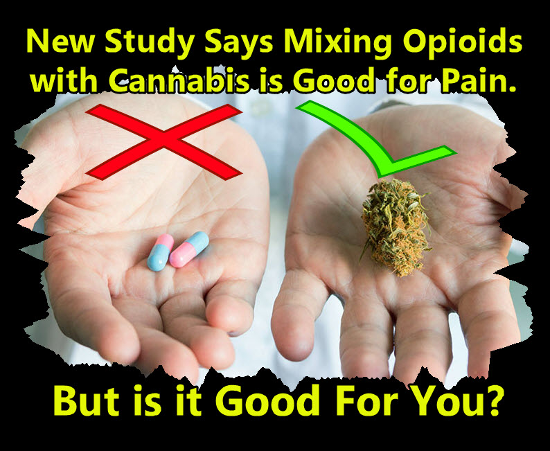 CANNABIS AND OPIOIDS MIXING TOGETHER