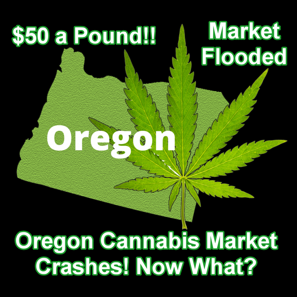 OREGON'S MARIJUANA PRICE CRASH