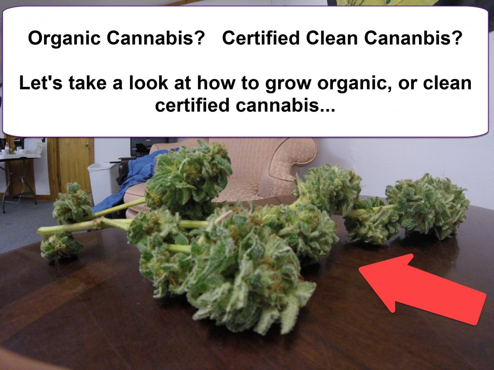 organic certified clean cannabis