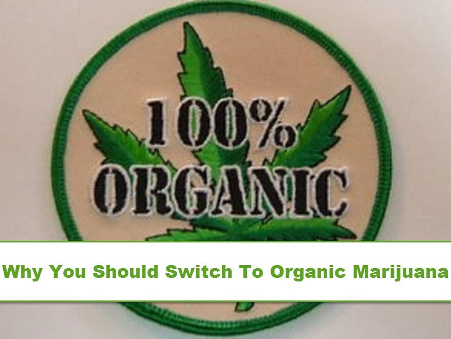 how to grow organic cannabis