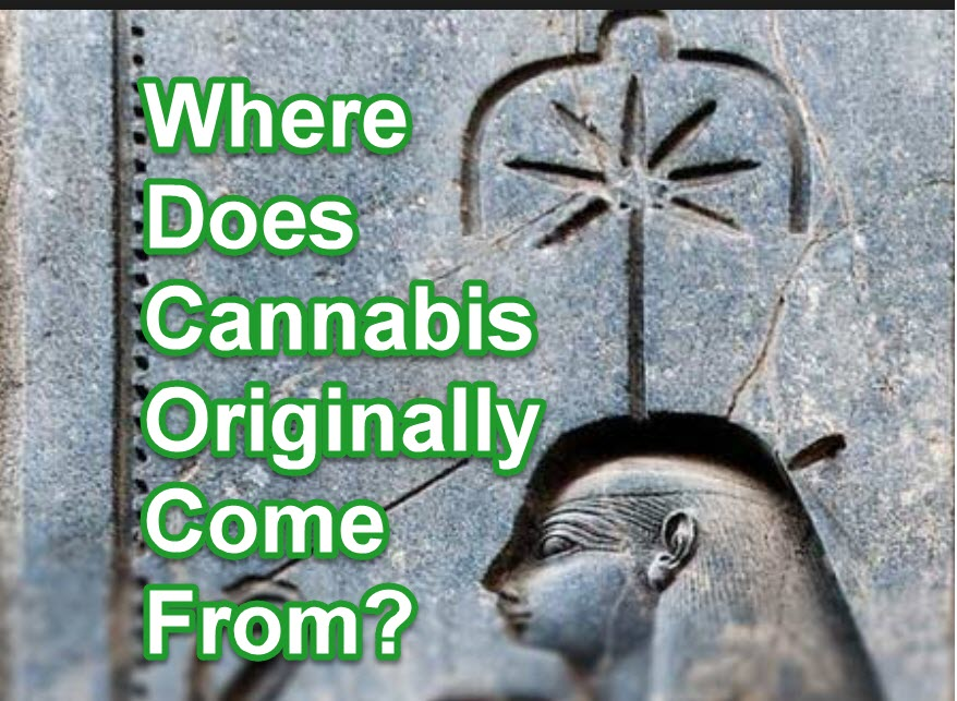 origins of the cannabis plant
