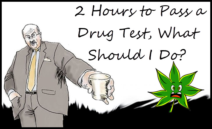 pass a drug test fast