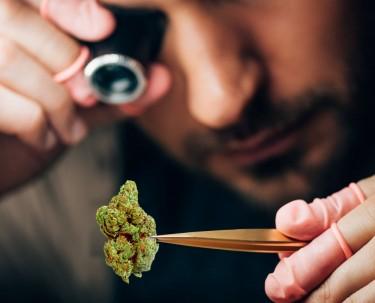 precision dosing of marijuana like coffee