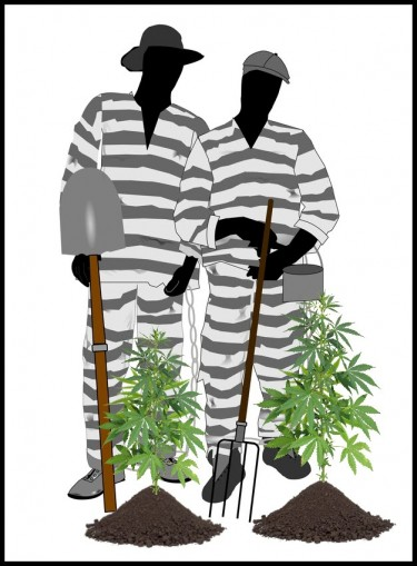 ohio program to teach convicts to sell weed