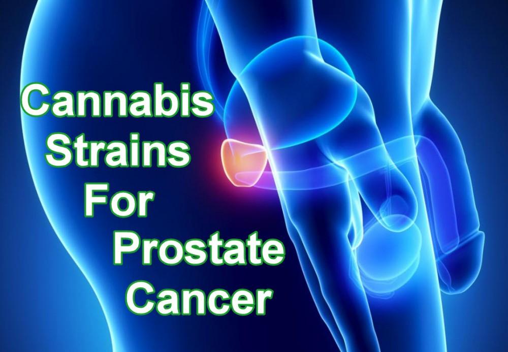 cannabis prostate