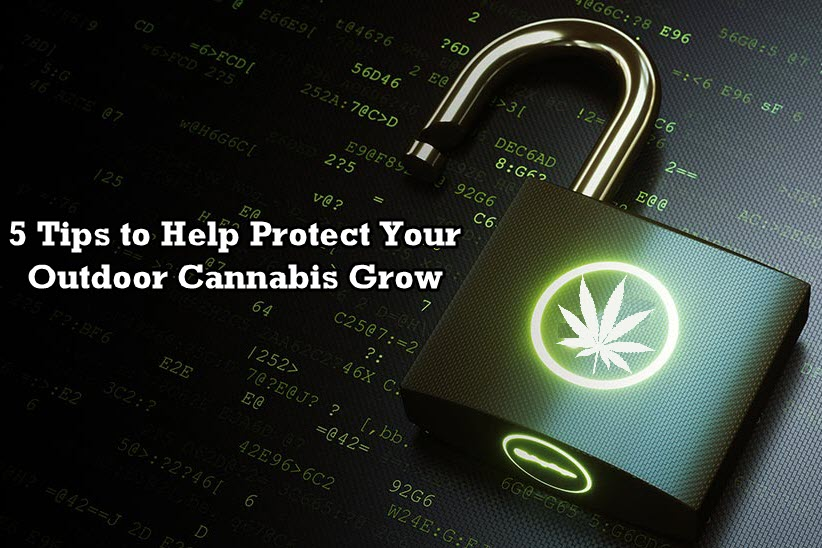 protecting your grow