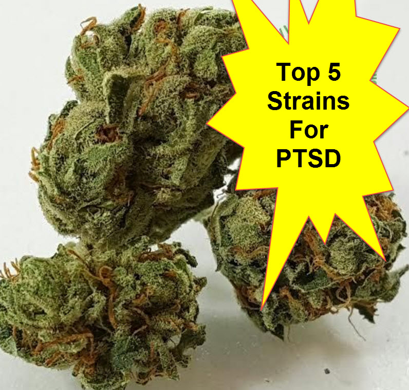MARIJUANA STRAINS FOR PTSD