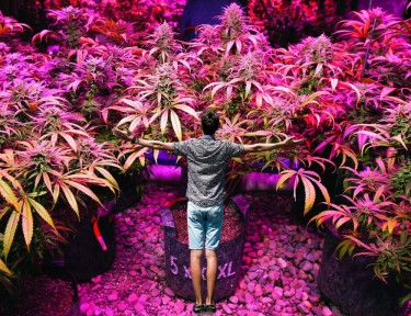 reasons to grow your own weed
