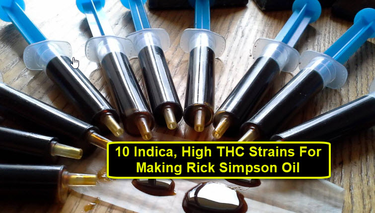 HIGH THC CANNABIS STRAINS FOR RICK SIMPSON OIL
