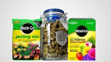 scottsmiracle-grow marijuana