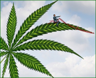 marijuana second business