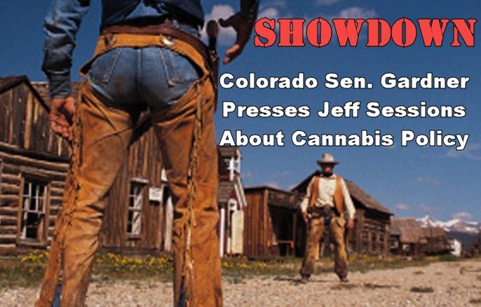 cannabis showdown