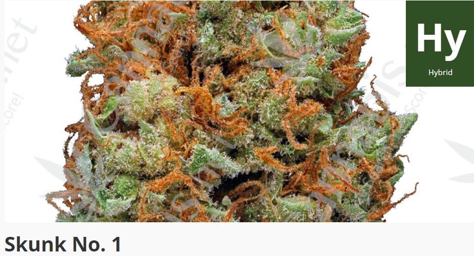 skunk no.1 strain