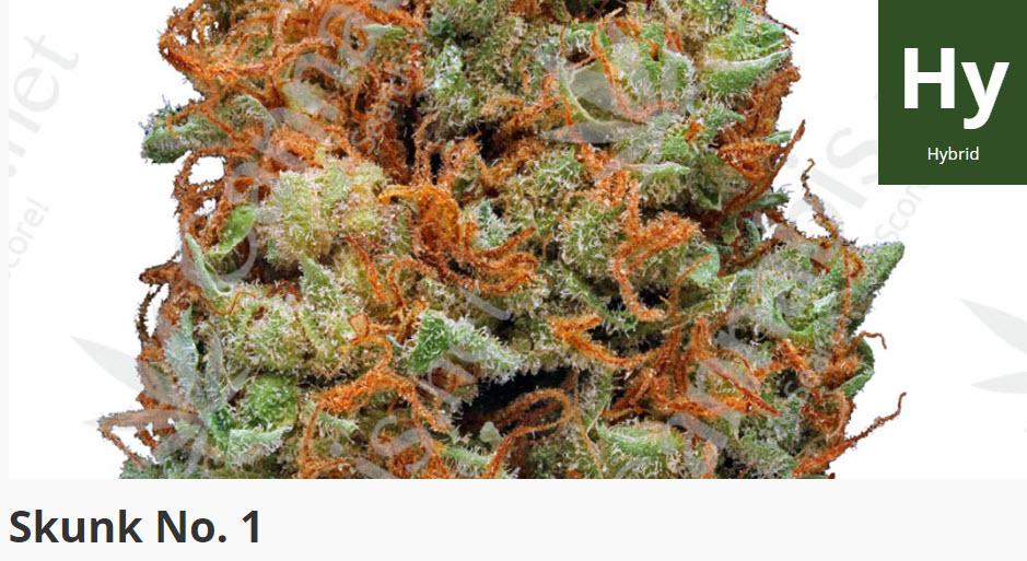 skunk 1 marijuana straing