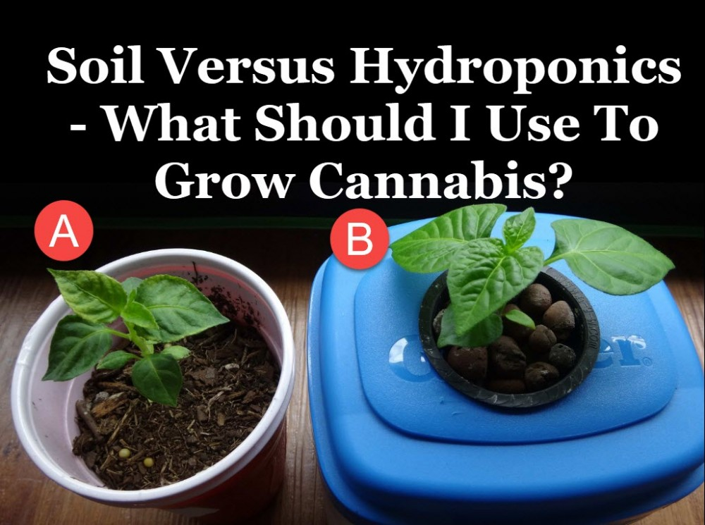 HYDROPONIC GROWING OR SOIL GROWING