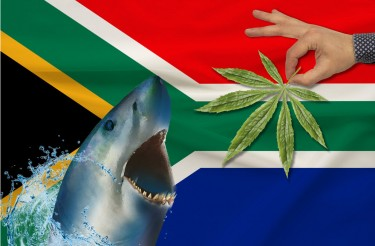 SOUTH AFRICA'S CORPORATE CANNABIS MARKET