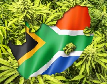 south african marijuana plans