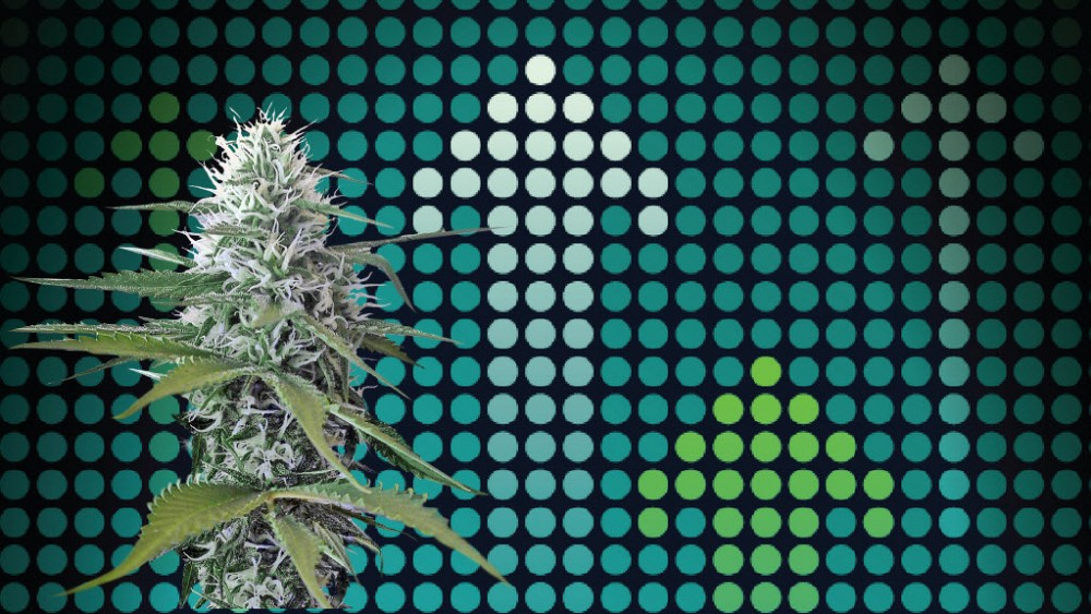 cannabis products spike in strength
