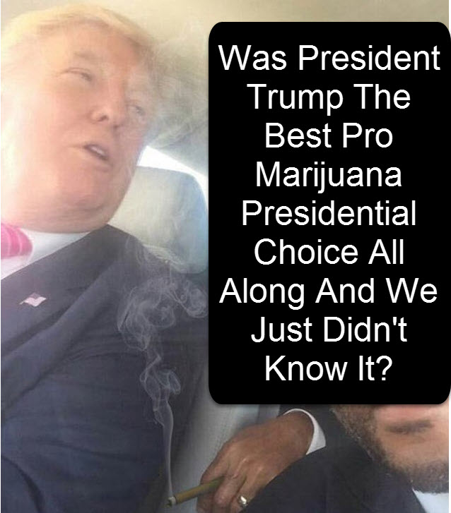trump legalizing marijuana