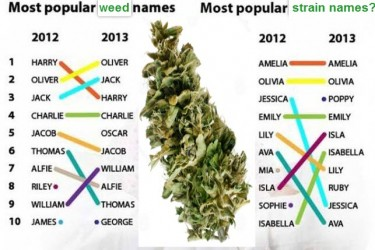 CANNABIS STRAIN NAMES NAME YOURS