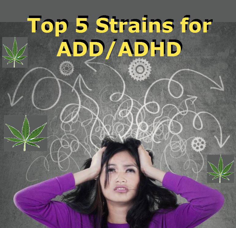Top 5 Cannabis Strains for OCD