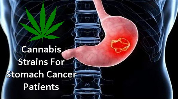 cannabis strains for stomach cancer