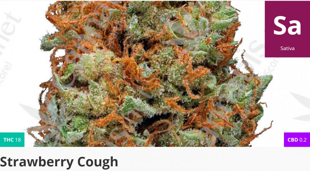 strawberry cough cannabis