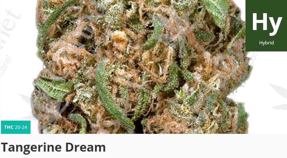 tanerine dream strain
