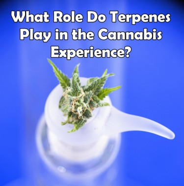 WHO ROLE DO TERPENES PLAY