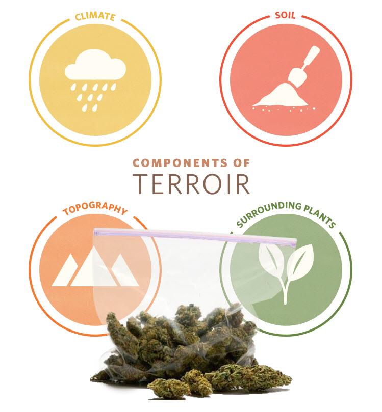 terroirofcannabis - The Wine Concept of Terroir in Your Cannabis Cultivation?
