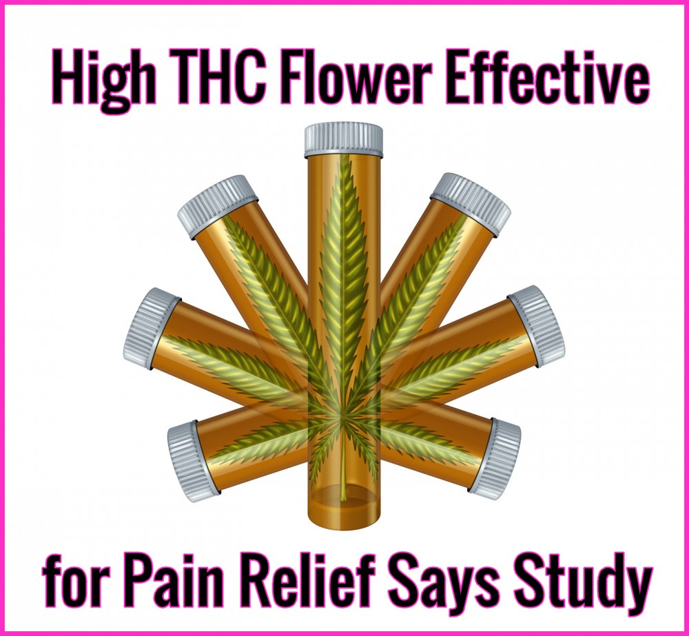 HIGH THC FLOWER FOR PAIN RELIEF