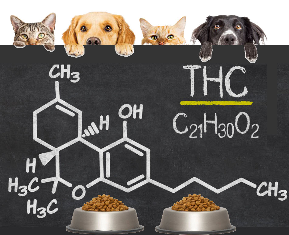thcforpetsanimals - Can Drug-Sniffing Dogs Tell the Difference Between Marijuana and Hemp?