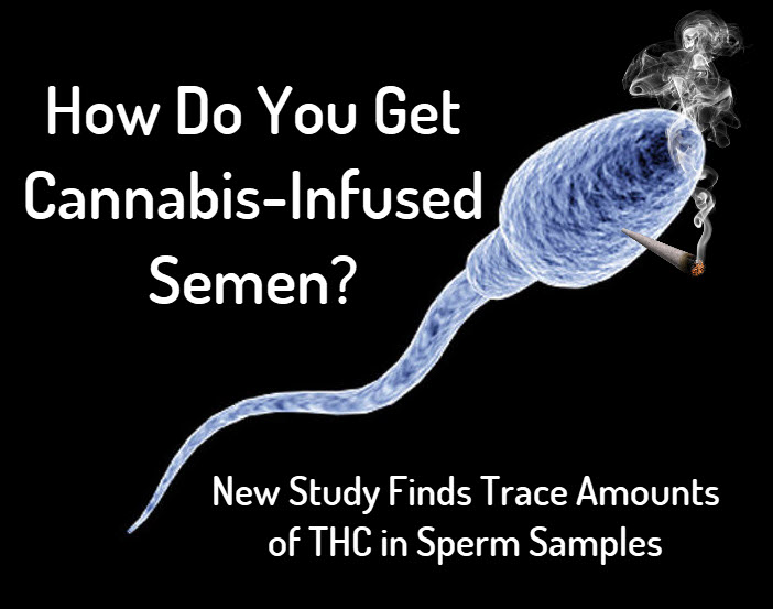thcinsemen - How Do You Get Cannabis-Infused Semen? - New Study Looks if THC is Present in Sperm Tests