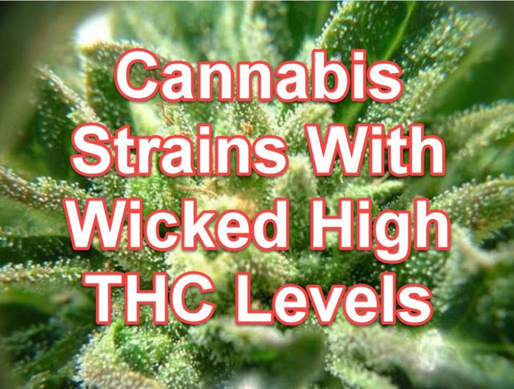 HIGH THC CANNABIS STRAINS